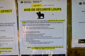 Attention aux loups...
